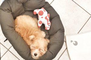 10 cose da comprare quando arriva un cucciolo