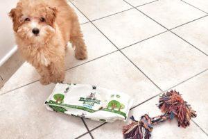 pulizia quotidiana del cane