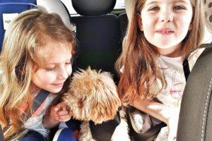 come trasportare un cane in auto