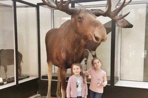 Un pomeriggio al museo civico di zoologia